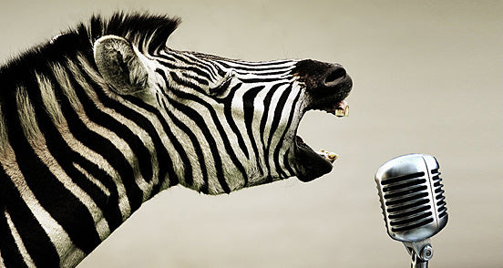 Rock and Roll Zebra