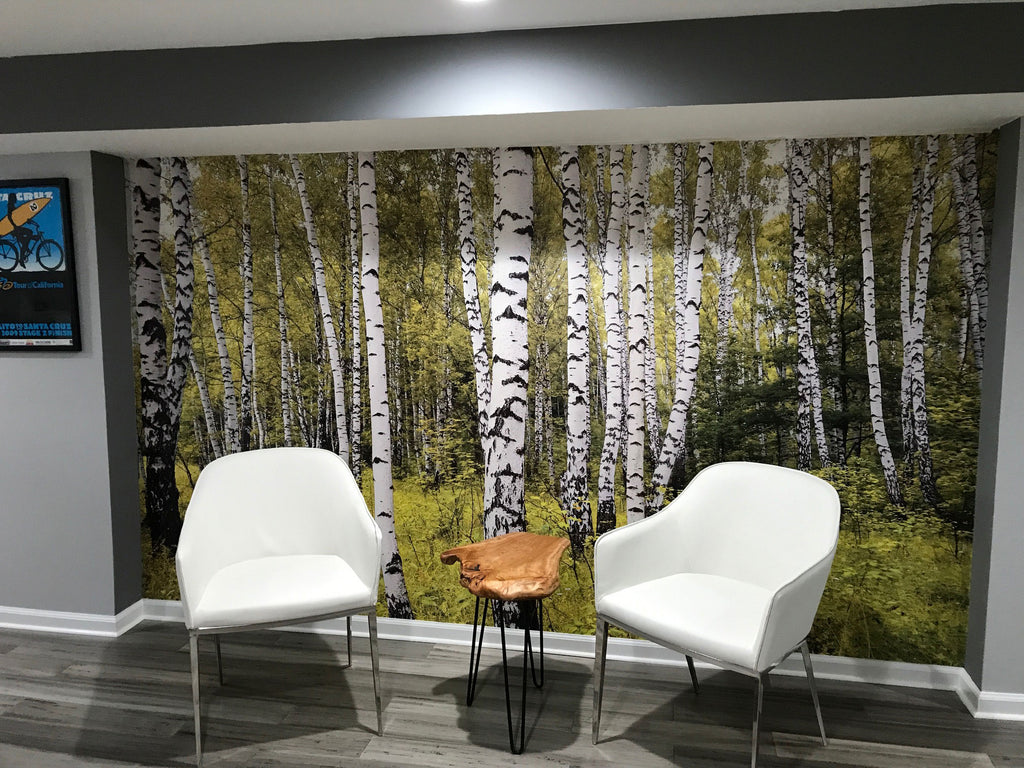 birch trees wallpaper wall mural forest tree eazywallz