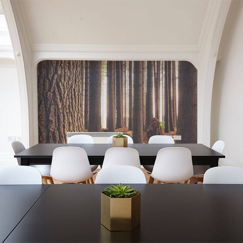 Forest Wall Mural in office space
