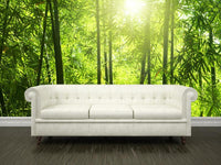 Bamboo forest Wall Mural-Landscapes & Nature,Zen-Eazywallz