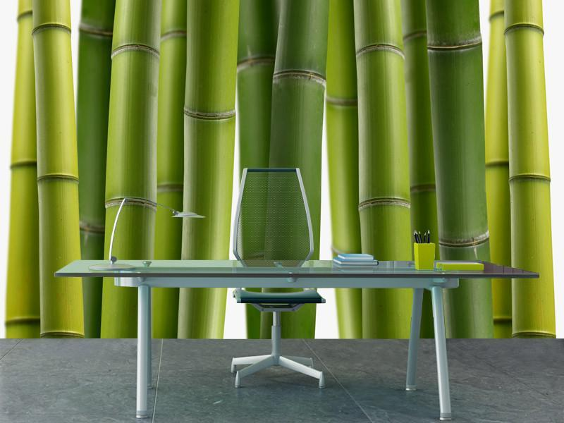 Bamboo jungle Wall Mural-Landscapes & Nature,Zen-Eazywallz