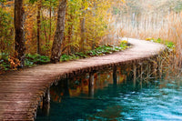 Boardwalk Wall Mural-Landscapes & Nature-Eazywallz