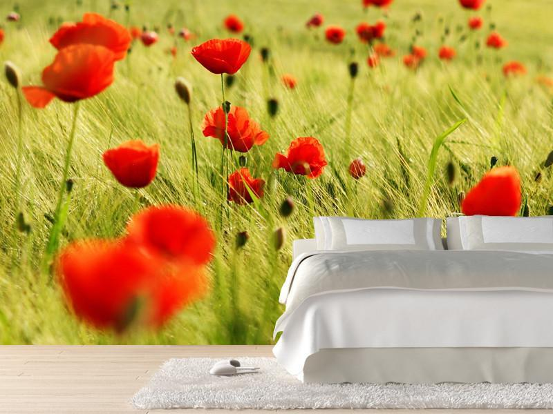 Bright red poppies Wall Mural-Florals,Featured Category of the Month-Eazywallz