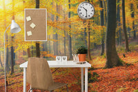 Forest in Autumn Wall Mural-Landscapes & Nature-Eazywallz