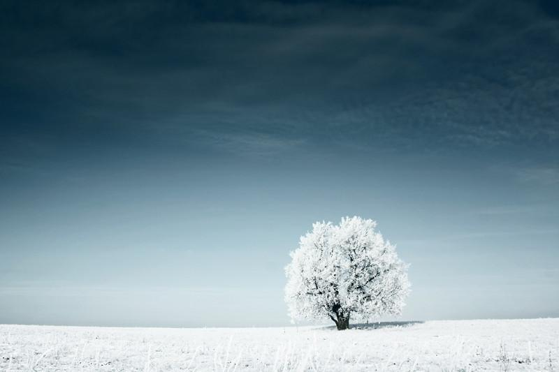 Frozen tree in snowy field Wall Mural-Landscapes & Nature-Eazywallz