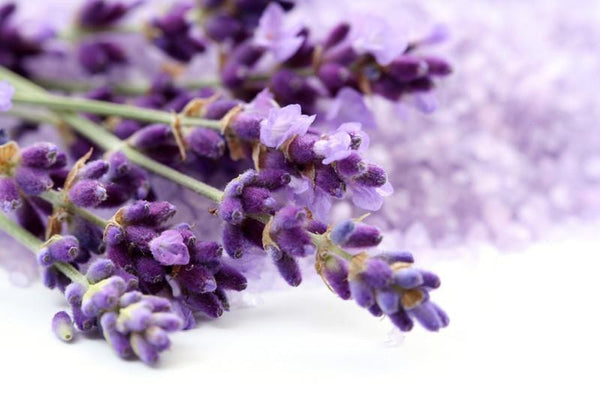 Lavender flower Wall Mural-Florals,Macro,Featured Category of the Month-Eazywallz