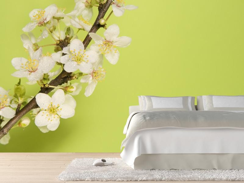 Plum blossoms Wall Mural-Florals,Featured Category of the Month-Eazywallz