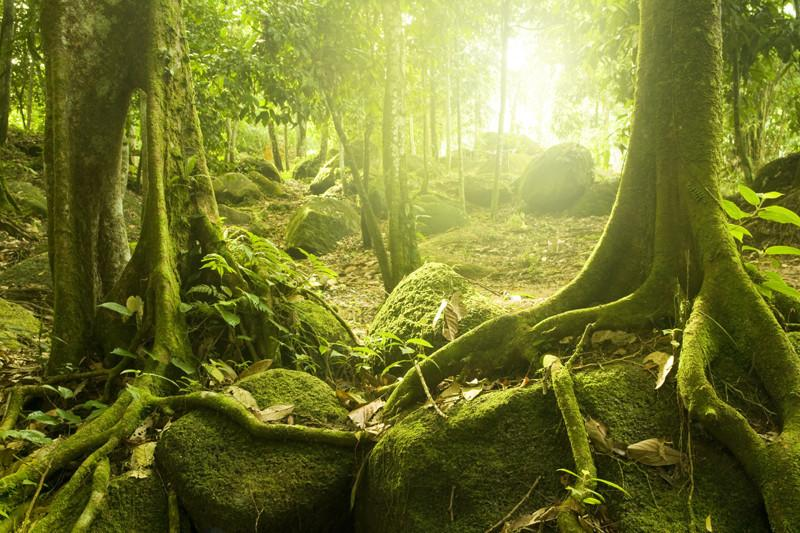 Rainforest and sunlight Wall Mural-Landscapes & Nature-Eazywallz