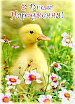 Birthday Postcard - Duckling/Flowers