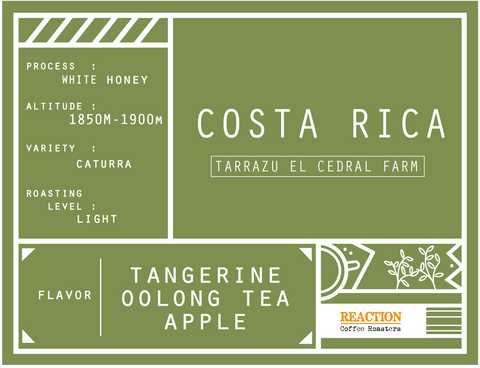 Single Origin - COSTA RICA Tarrazu El Cedral Farm