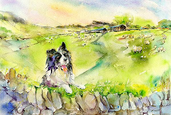 Dog Border Collie  Print