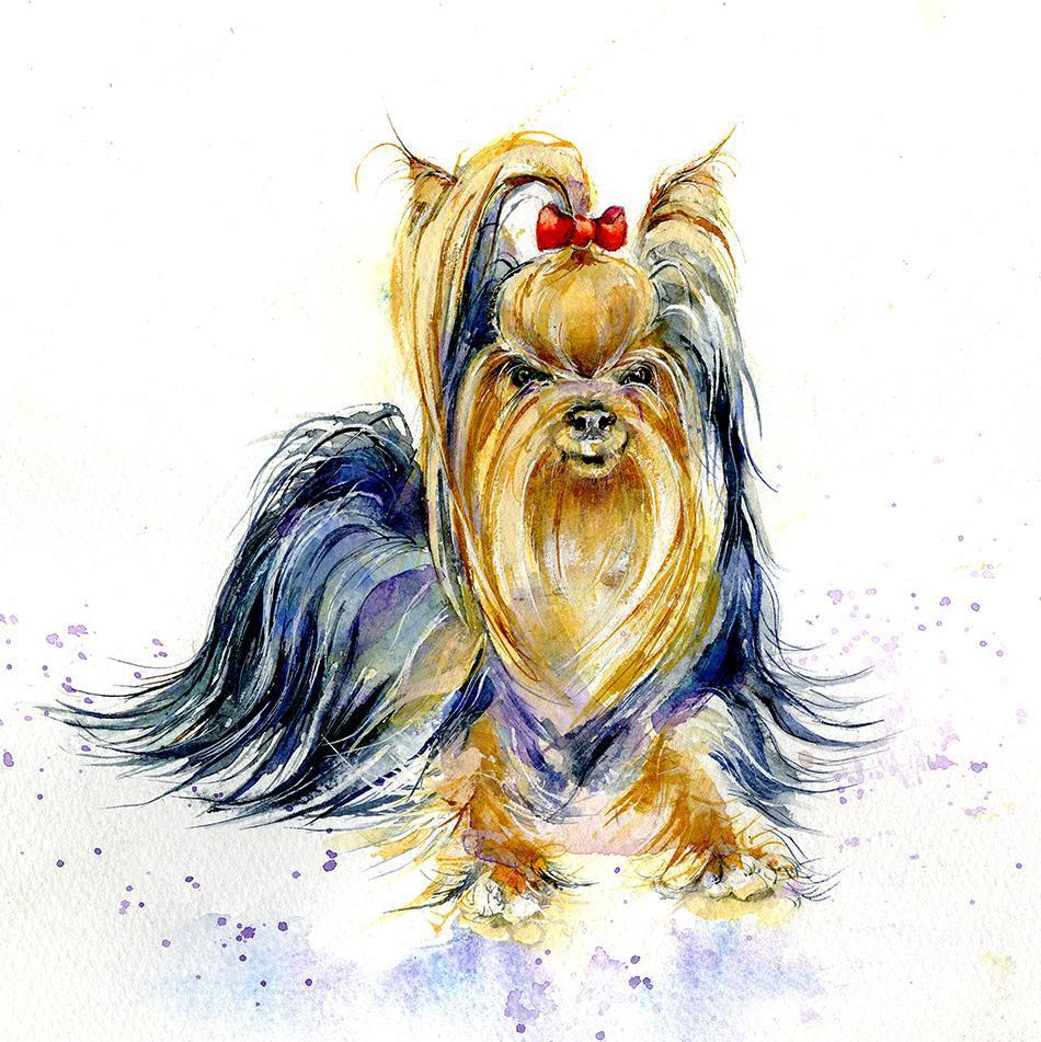Dog Yorkshire Terrier  Print