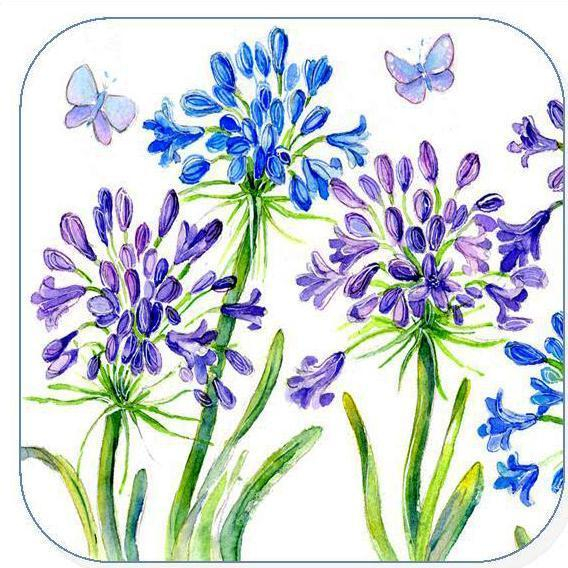 Agapanthus, Flower -  Coaster
