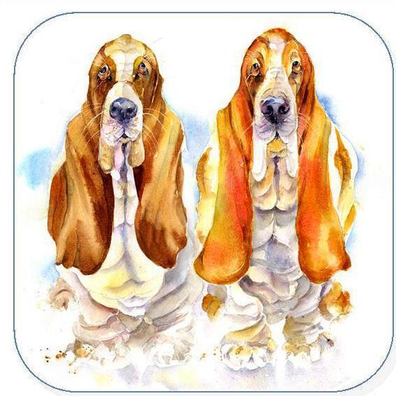 Basset Hounds - Coaster