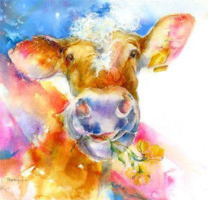 Cow Buttercup  Print
