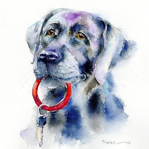 Black Labrador Dog  Print