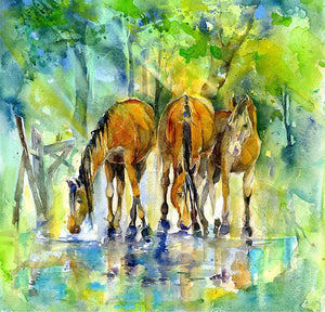 New Forest Ponies Horse  Print