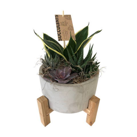 Stone and wood succulent planter