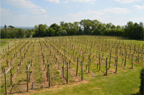 Welcombe Hills Vineyard
