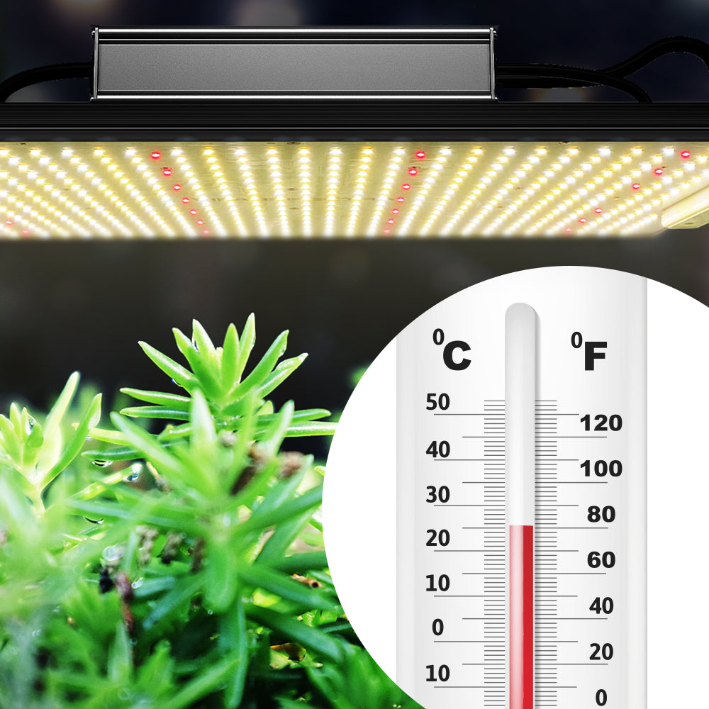 Temperature Affecting Plant Growth