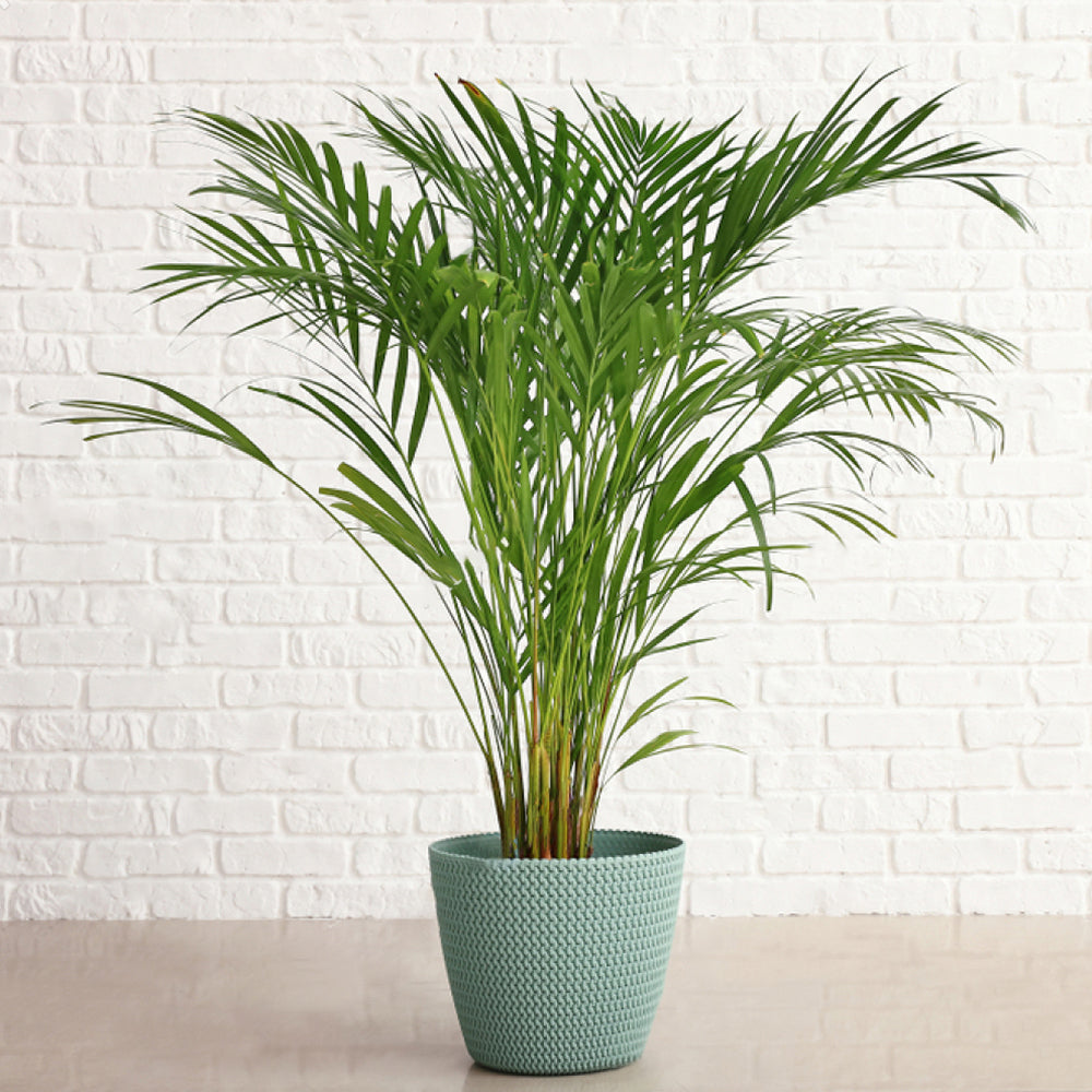 best houseplants