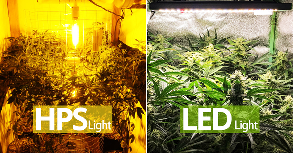 HPS compared with LED grow light