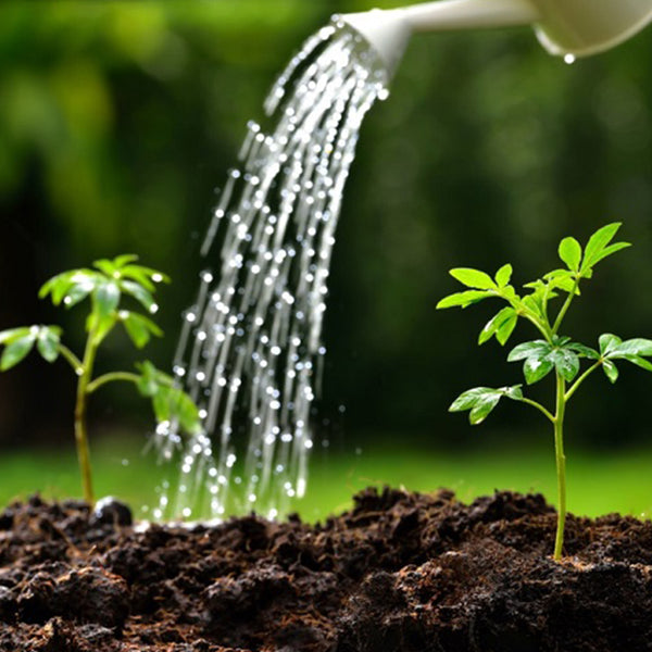 water affect plants grow
