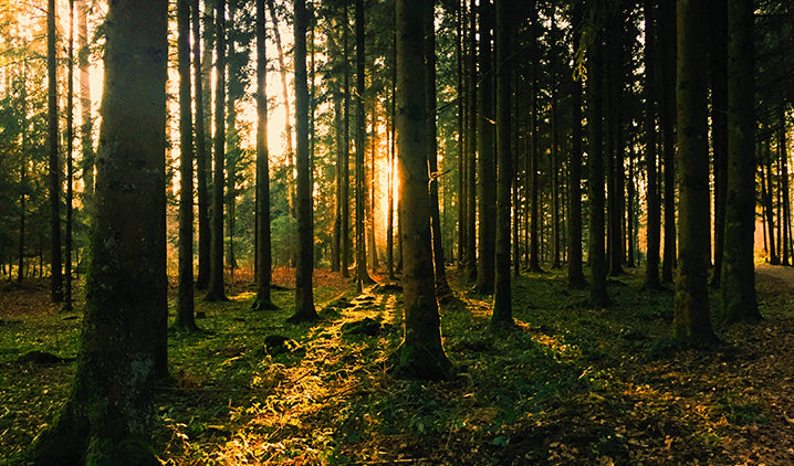 How To Grow Your Forest?