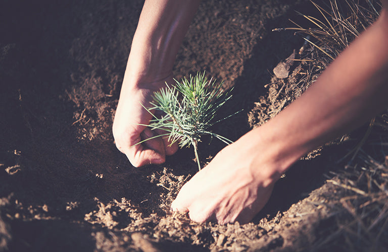 Plant a tree that produces the most Oxygen