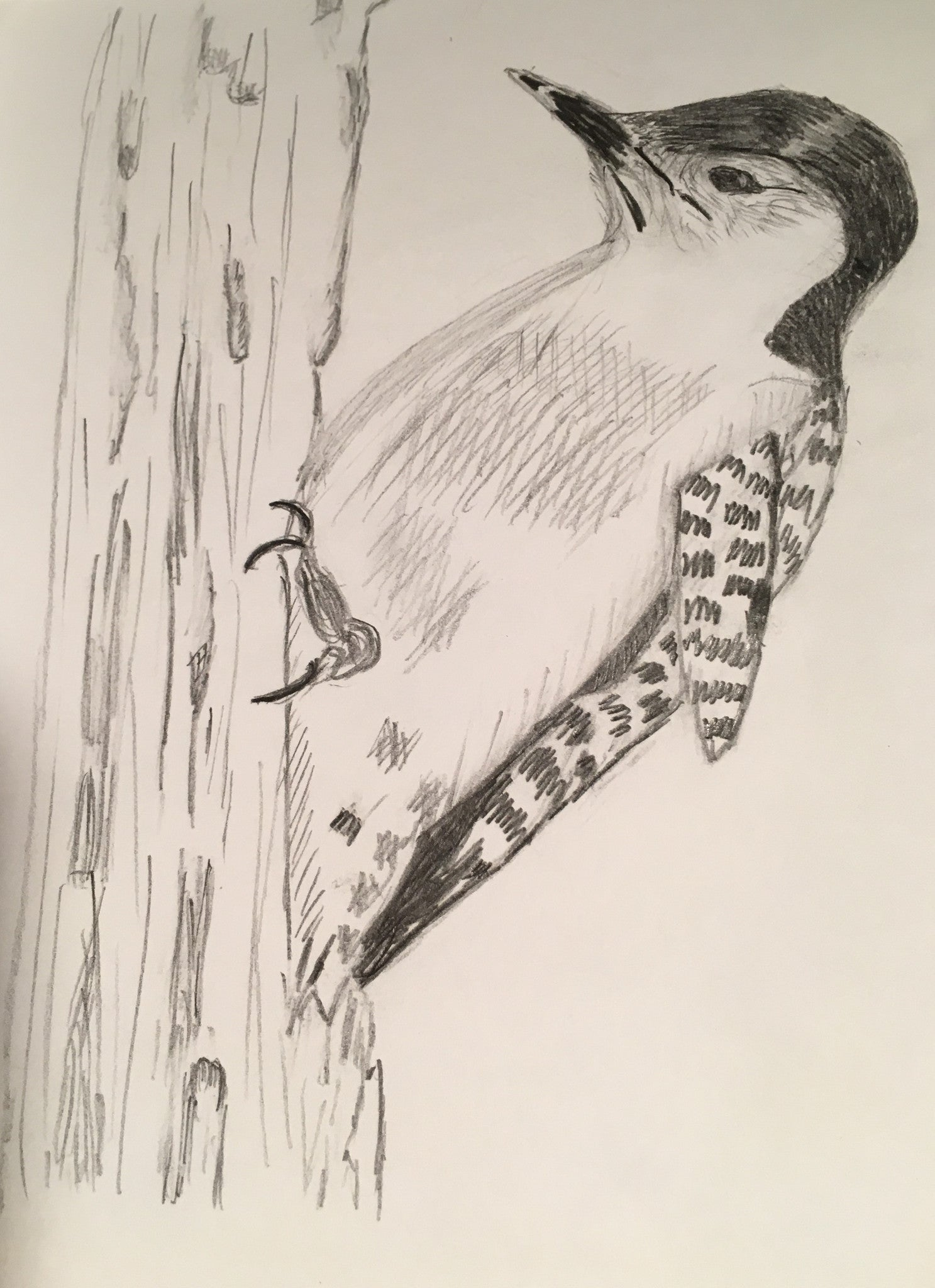 "Woodpecker in Springtime - Print  of original painting on a 8""x10"" canvas"
