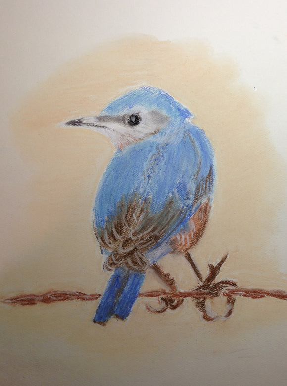Bluebird of Happiness - Photo enclosed in your greeting card