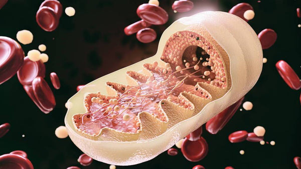 10 Worst Things For Mitochondria Function