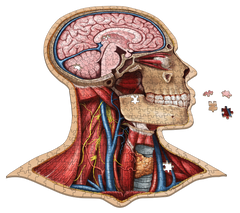 Human Head Anatomy Jigsaw Puzzle | Unique Shaped Science Puzzles with Accurate Medical Illustrations