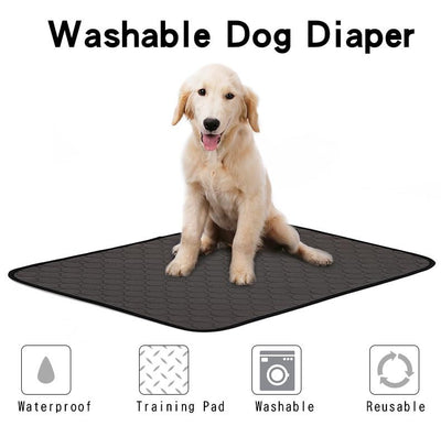 Pet Water-Absorbent Training Pad