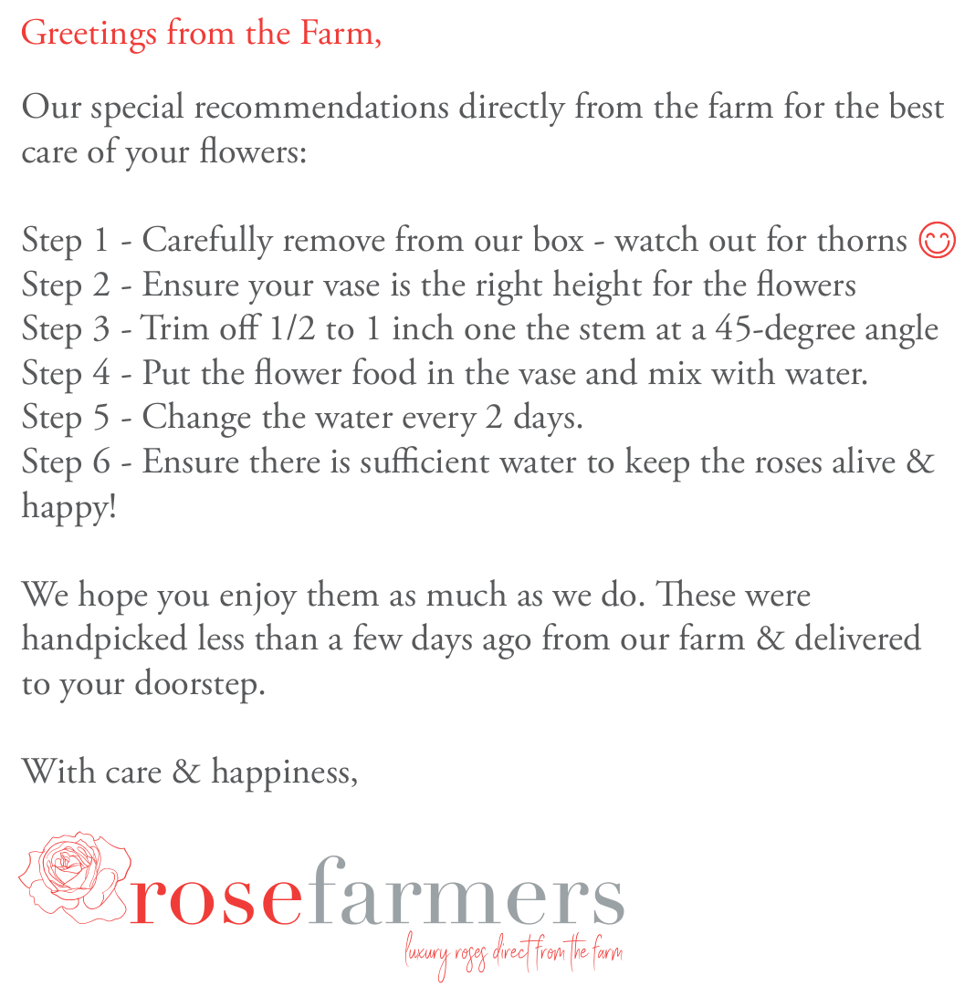 Long Stem Roses Care Instructions