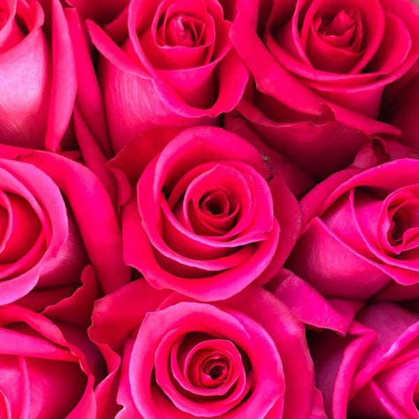 Hot Pink Long Stem Roses (Add On)