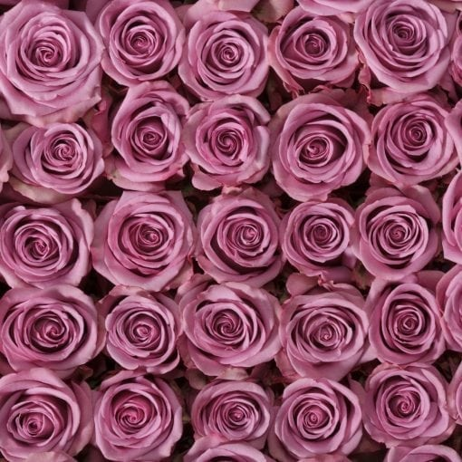 Purple Attraction Long Stem Roses (Add On)