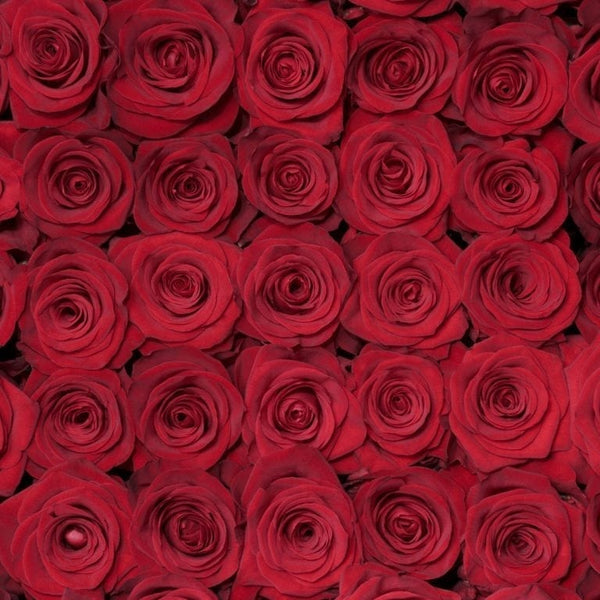 Red Romantic Long Stem Roses (Add On)