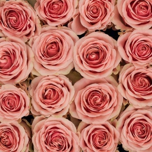 Pink Bi-Color Eyecatcher Long Stem Roses (Add On)