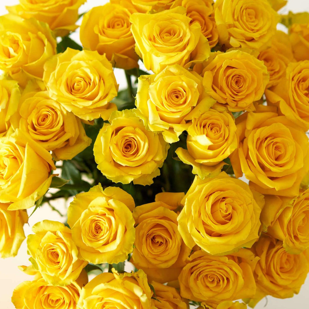 Yellow Bright Long Stem Roses