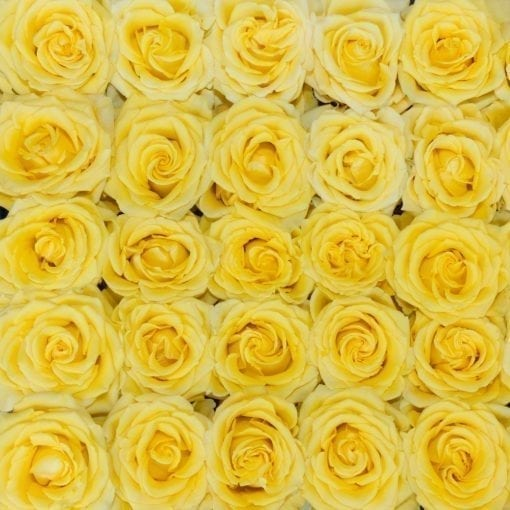 Yellow Bright Long Stem Roses (Add On)