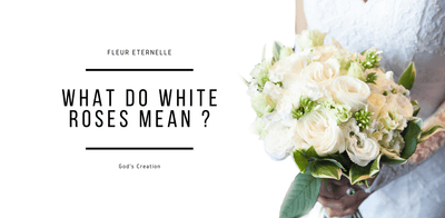 What do a white rose mean ?