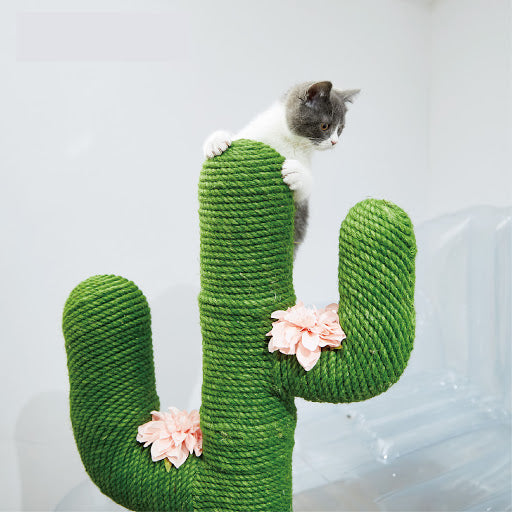 ClawCactus Post for Cats