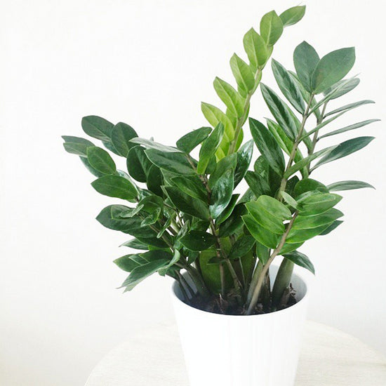 Remove Pollution with the Help of Houseplants