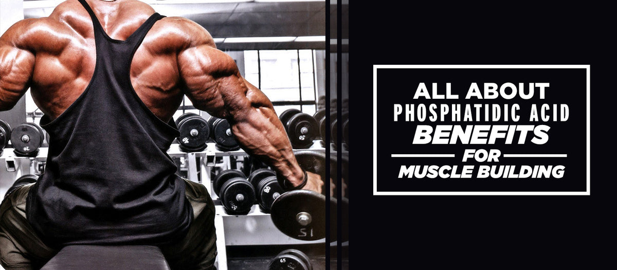 All About Phosphatidic Acid Benefits For Muscle Building