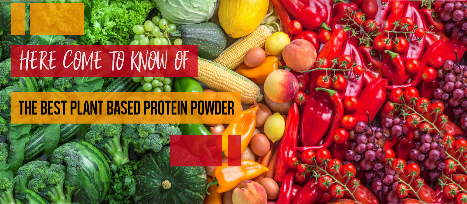 Here Come To Know Of The Best Plant Based Protein Powder