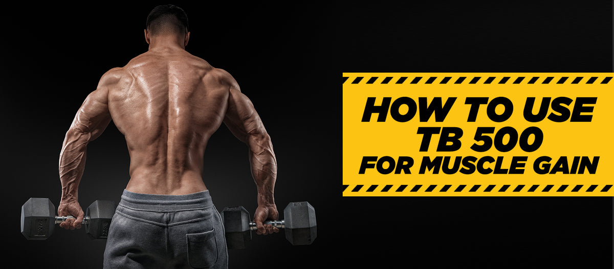 How To Use TB 500 For Muscle Gain