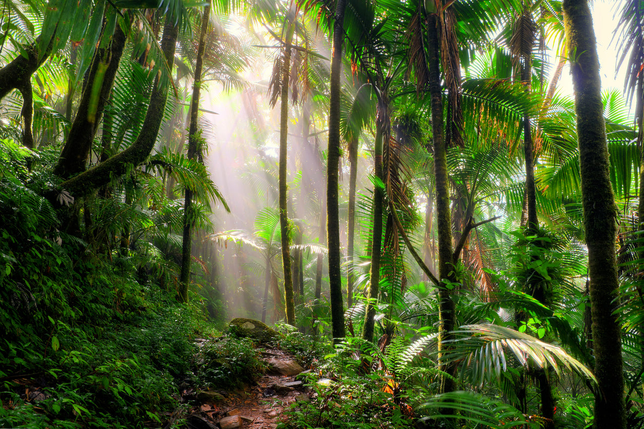 Rainforest Facts for KS2 Children and Teachers