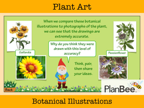 Plant Art | One-Off Art Lessons KS2