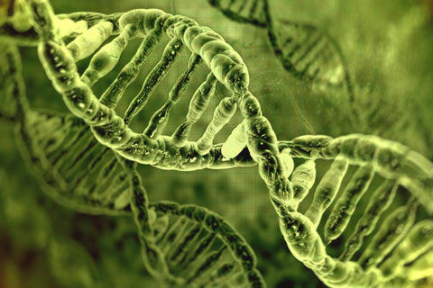Jeans for Genes | Microscopic view of DNA